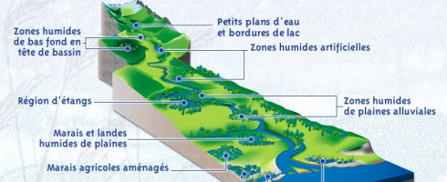 Les «compensations écologiques» : une aberration anti-écologique.